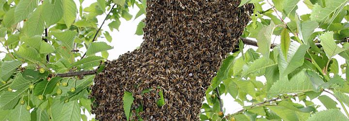Insekten–Gewann-Harthau-T